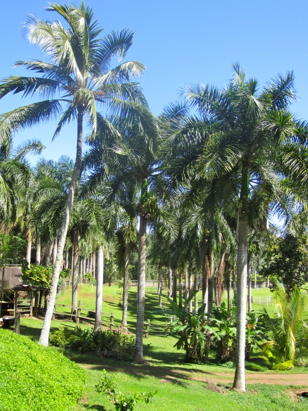 Royal Palms.