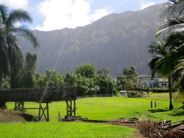 The farm snuggles up against the base of the Ko'olau mountain range.