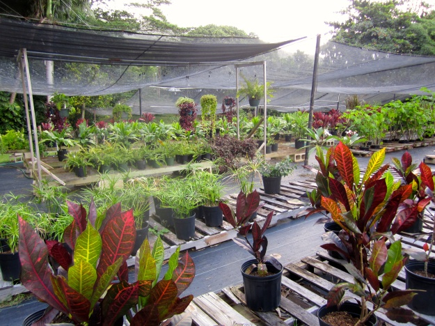 Raising landscaping plants under shadecloth.